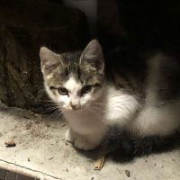 Fundkatze in Wannsee (13.9.2021)